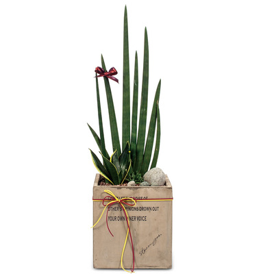 스투키공기정화식물