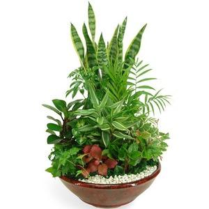 산세베리아모듬식물