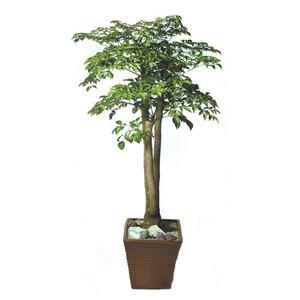 해피트리(행복 나무)